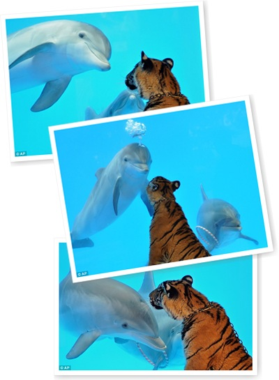 View Tiger & Dolphin